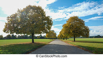 Autumn tree avenue in an Essex park