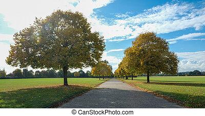 Autumn tree avenue in an Essex park