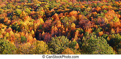 Autumn tree background - Carpet of bright autumn trees in...