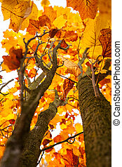 Colorful autumn tree. Beautiful rural scenery.