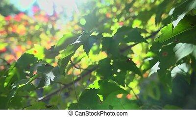 autumn tree branch pan
