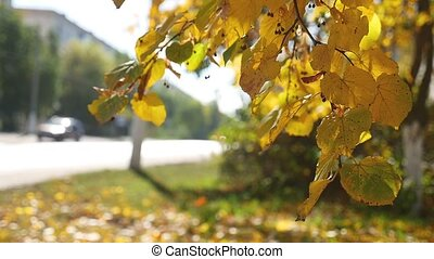 Autumn tree branch swaying in the wind in background Road traffic Car nature