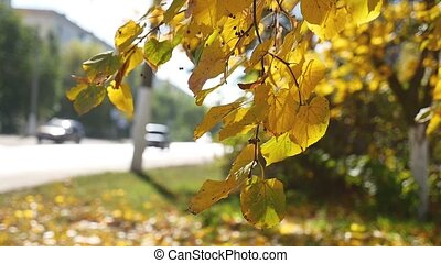 Autumn tree branch swaying in the wind in the background Road traffic Car nature