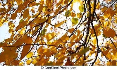 autumn tree branches sunlight leaves. Autumn the landscape....