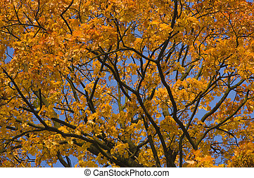 Autumn tree branches with bright colorful yellow orange autumn leaves on blue sky background