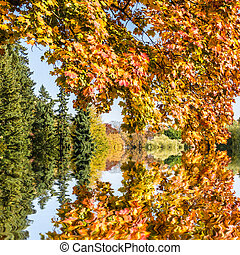 autumn tree by a lake