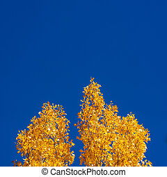 Autumn tree colors under the clear blue sky