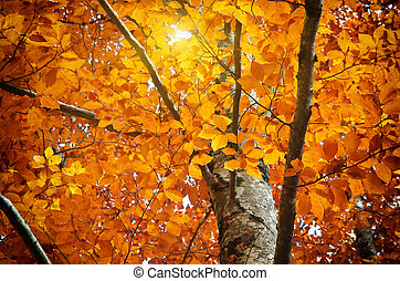 Autumn tree. Composition of nature.