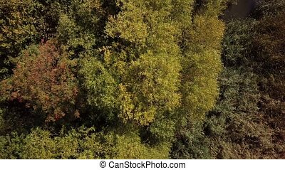 autumn tree crowns view from above - autumn forest with tree...