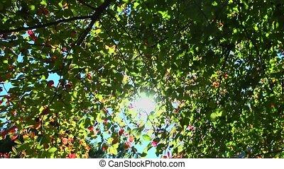 autumn tree dolly