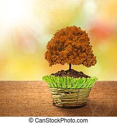 autumn tree in decorative pot