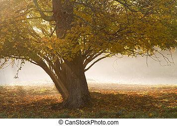 Autumn tree in fog.