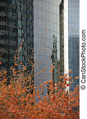 Autumn tree in front of glass tower building