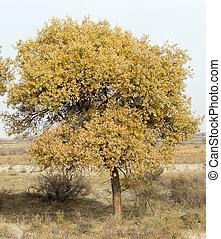 autumn tree in nature