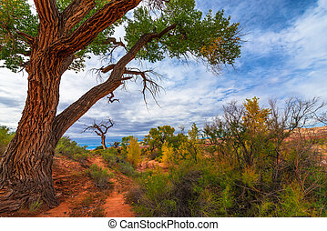 Autumn Tree in the Canyon - Utah Fall Landscape
