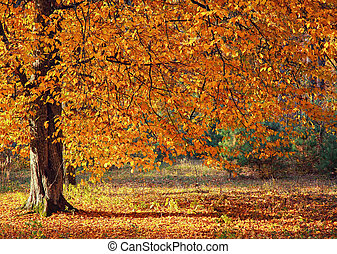 Autumn tree in the forest