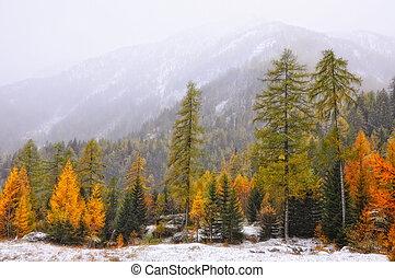 Autumn tree in the mountain