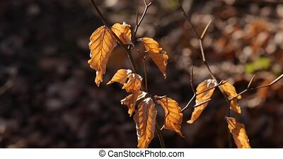 Autumn tree leaves - Autumn leaves on pale branch in deep ...