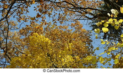autumn tree leaves sky