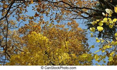 autumn tree leaves sky