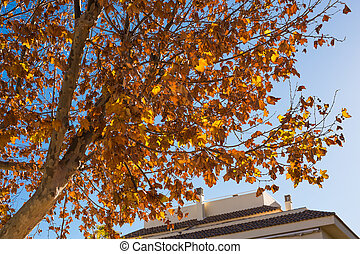 Autumn tree on a background of blue sky