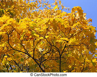 autumn tree on blue sky background