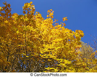 autumn tree on blue sky background