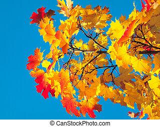 autumn tree on blue sky