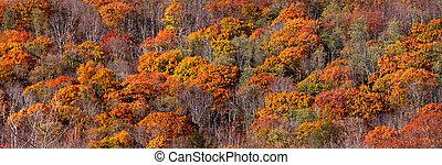 Autumn tree panorama