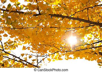 Autumn tree sunlight isolated on white