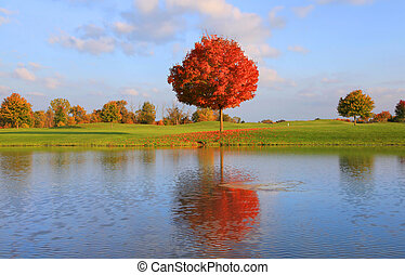 Autumn tree reflection