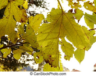 Autumn Tree thick with Yellow and Green Leaves
