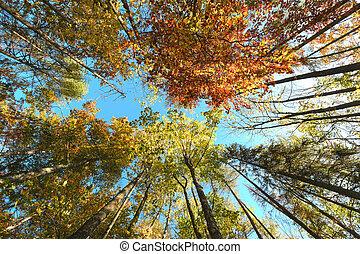 Autumn tree tops in autumn forest scene