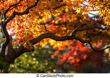 autumn tree, very shallow focus