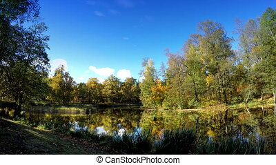 Autumn tree with bright foliage is reflected in the lake