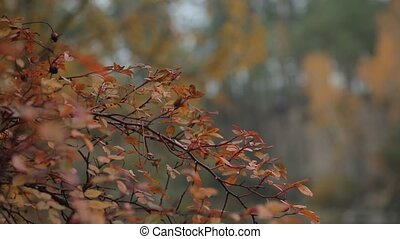 Autumn tree with golden leaves close up