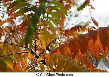 Autumn tree with long red, yellow, green leaves