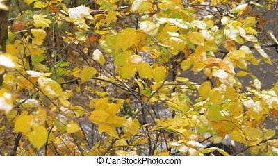 Autumn tree with one leaf falling down - Cinemagraph -...