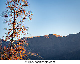 Autumn tree with partially fallen leaves and yellow leaves on a background of mountains and blue sky