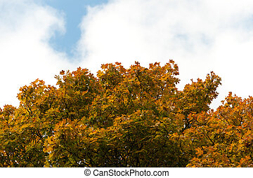 Autumn tree with yellow foliage on a background of the blue sky