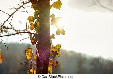 Autumn tree with yellow leaves and sun beam