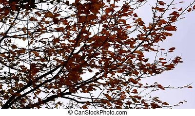Autumn tree with yellow leaves sways in the wind on a background of sky.