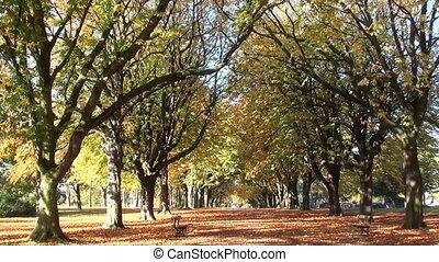 autumn trees 07
