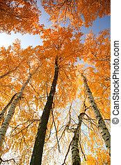 Autumn trees against the sky