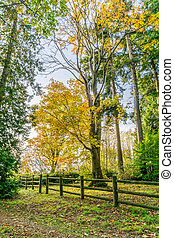 Autumn Trees And Fence 2 - A view of autumn trees and a ...