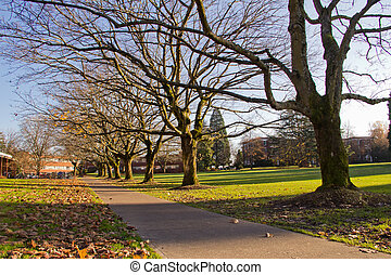 Autumn Trees and Leaves on College Campus - Walkway with...
