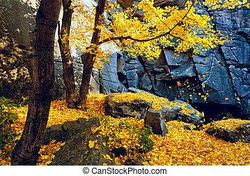 Autumn trees and rocks