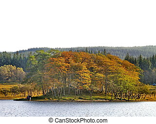Autumn trees at the bank of a lake