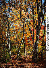 Autumn trees - Autumn maple trees with colorful fall foliage...