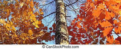 autumn trees - autumn panorama- big size file